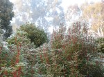 Frosty morning at Tumbeela