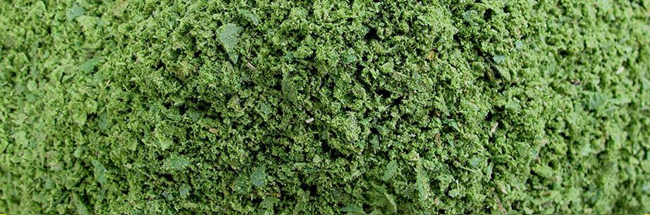 Ground Lemon Myrtle leaves